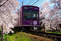 桜2019!~嵐電桜のトンネル~ - Prado Photography!