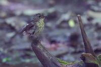 幼鳥オンパレード - 上州自然散策2