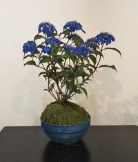 藍姫・布絵アジサイ展 - 海辺のキッチン倶楽部もく