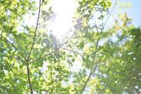 新緑の丹沢縦走 - GreenLife