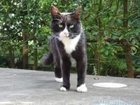 クマちゃん - ネコと裏山日記