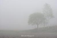 ぼんやり煙る - ekkoの --- four seasons --- 北海道