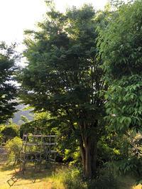 一つの命 - 三楽 3LUCK 造園設計・施工・管理 樹木樹勢診断・治療
