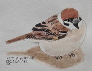 #野鳥スケッチ #ネイチャー・ジャーナル 『雀』Passer montanus -