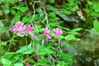 飛騨山脈の登山道 - 飛騨山脈の自然