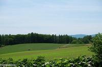 丘の畑とトラクター~6月の美瑛 - My favorite ~Diary 3~