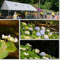 遊ぼう会6月住吉アジサイ&姫戸菖蒲園へ - 気ままにデジカメ散歩