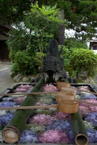 天水を彩る楊谷寺 - 京都ときどき沖縄ところにより気まぐれ