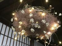 スモークツリーのフライイングリース「雲と花と星と・・・」編 - 納屋Cafe 岡山