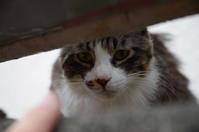 猫たちと戯れた日 - 岳の父ちゃんの PhotoBlog