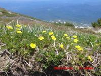 外輪の花 - 花立の花情報