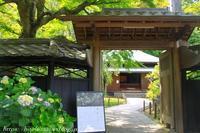 北鎌倉東慶寺の紫陽花 岩がらみ - 暮らしを紡ぐ