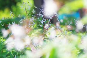 6月14日今日の写真 - ainosatoブログ02
