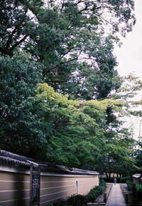 Filmカメラの誘惑 #3 パープルフリンジ - Bronz Photo