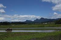日本の初夏は田植え風景 - 風の彩り-2
