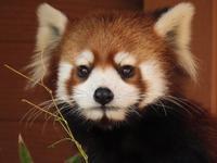 八景島シーパラダイスと野毛山動物園の旅行記を姉妹ブログ「レッサーパンダ紀行」にアップしました - (続)レッサーパンダ紀行