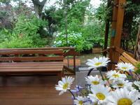 雨の日は - だんご虫の花