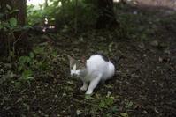 猫とアンズ - 世話要らずの庭
