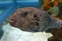 NIFREL(ニフレル)4水族館 - 第3の人生
