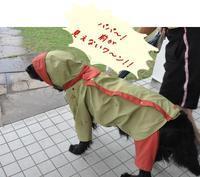 梅雨模様 - Genki DaysⅡ