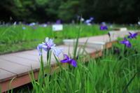 【四季の森公園】 - うろ子とカメラ。