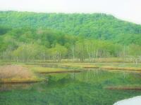尾瀬新緑の湿原池塘 - 風の香に誘われて 風景のふぉと缶
