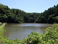 蕾が増えます - 千葉県いすみ環境と文化のさとセンター