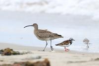 海で見た鳥さんたち・1♪ - happy-cafe*vol.2