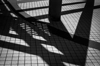抽象芸術を主張する美術館の光蜥蜴 - Silver Oblivion