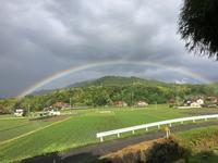 『パーフェクトな今朝の虹』&『裏山のスモークツリーは今』 - CROSSE 便り