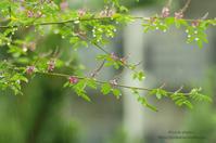 マクロde雫 -コマツナギ- - It's only photo 2
