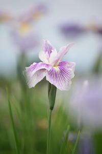 季節の花を - 季節の映ろひ
