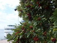 6月16日(日)、北田はじめ写真展「Garden Plants」は今日最終日です - フォトカフェ情報