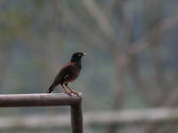 デイゴの季節・9!! - 季節の鳥達