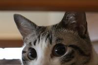 家の中の猫道 - ぎんネコ☆はうす