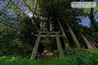 名も知らない神社の巨樹 - Mark.M.Watanabeの熊本撮影紀行
