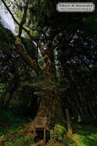 名も知らない神社の巨樹-2 - Mark.M.Watanabeの熊本撮影紀行