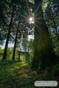 名も知らない神社の巨樹-3 - Mark.M.Watanabeの熊本撮影紀行