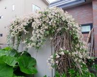 クレマチスの物置/ Beautiful Garden Shed. - 花と天然石ハンドメイドジュエリー