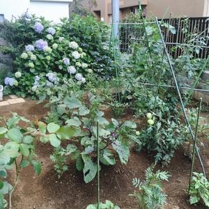 goodの家庭菜園 - good!ブログ