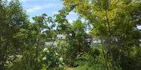 夏の庭 と 板橋の家 雨養生 - 成長する家 子育て物語