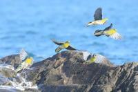 16時半の海岸 - TACOSの野鳥日記