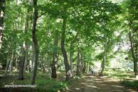 木漏れ日の路が続く公園 - My time...5人の天使と Ⅱ