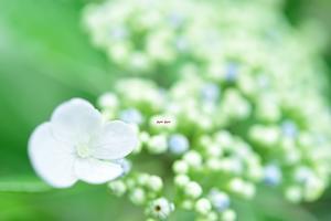 つゆの花びら - 一歩々々 ~いっぽいっぽ~