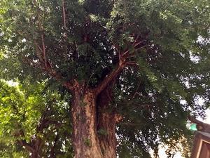 六甲山と瀬織津姫 241 「ワニの珠」再び - 追跡アマミキヨ