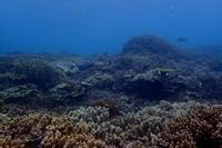 19.6.17台風婦人、来店ですが - 沖縄本島 島んちゅガイドの『ダイビング日誌』
