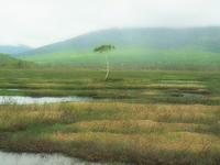 再会尾瀬ヶ原のある一本の木 - 風の香に誘われて 風景のふぉと缶
