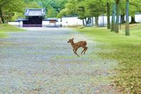jumping ☆ Bambi - 東大寺が大好き