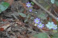 4月の山活①**ヒミツの花園を捜しにin 香川県・飯野山 - きまぐれ*風音・・kanon・・