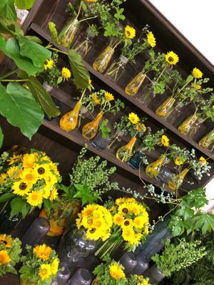 ひまわりまつり!開催中。10本950円 - 目黒区 都立大の 花屋  moco    花と 植物で楽しい毎日     一人で全力で営業中